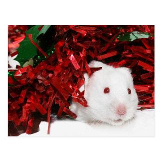 White hamster Christmas Postcard