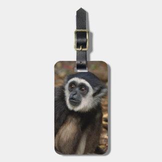 White-Handed Gibbon (Hylobates Lar), Monkeyland Luggage Tag