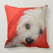 white havanese dog lies on orange cushions