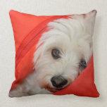 white havanese dog lies on orange cushions throw pillows