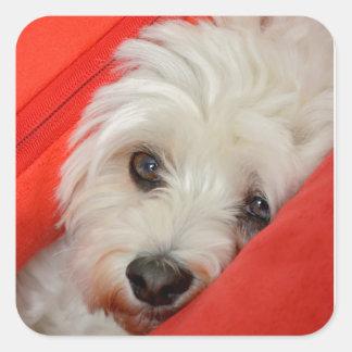 white havanese dog lies on orange cushions square sticker