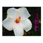 White Hawaii Hibiscus Post Cards