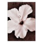 White Hawaiian Hibiscus Sepia Tropical Flower Greeting Cards