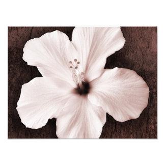 White Hawaiian Hibiscus Sepia Tropical Flower Photo Print