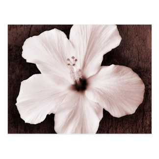 White Hawaiian Hibiscus Sepia Tropical Flower Postcard