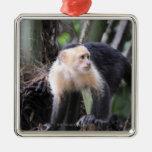 White-headed capuchin, Cebus capucinus. Playa Square Metal Christmas Ornament