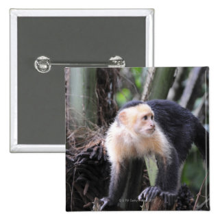 White-headed capuchin, Cebus capucinus. Playa Pinback Button