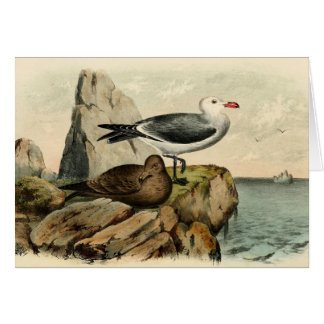 White Headed Gull Stationery Note Card