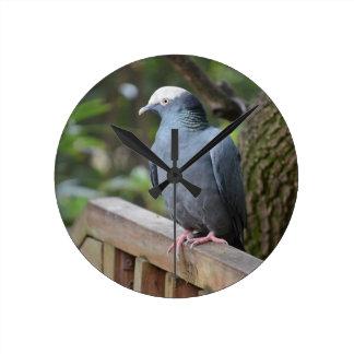 white headed pigeon on deck rail bird round clock