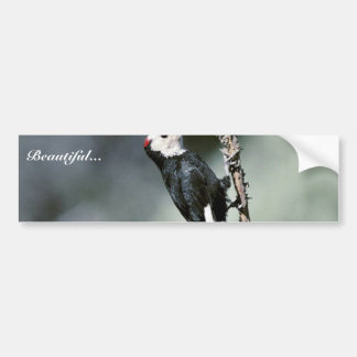 White-headed woodpecker car bumper sticker