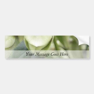 White Hellebore Flower Bud Bumper Stickers