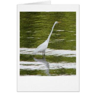 White Heron Bird Notecard