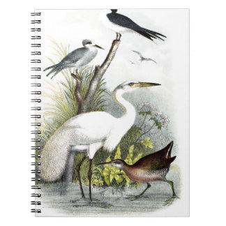 White Heron Notebooks