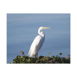 White Heron on Lilypads Canvas Print