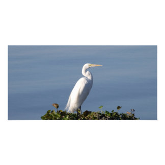 White Heron on Lilypads Card