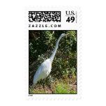 White Heron Postage Stamps