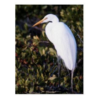 White Heron Postcard