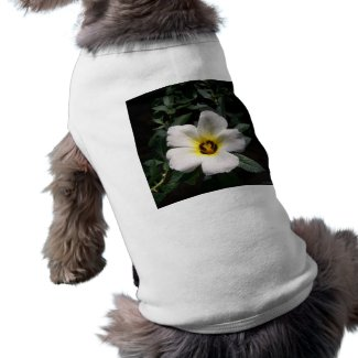 White hibiscus flower red center dark background petshirt