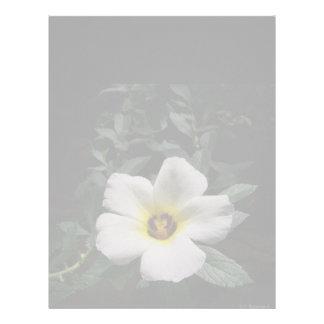 White hibiscus flower red center dark background letterhead