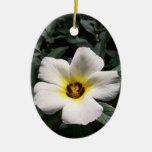 White hibiscus flower red center dark background ornament