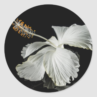 White Hibiscus Flower Side View Classic Round Sticker