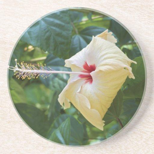 White Hibiscus Rosa Sinensis China Rose Mallow Beverage Coasters
