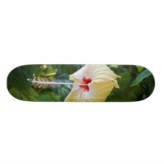 White Hibiscus Rosa Sinensis China Rose Mallow Skateboard Deck