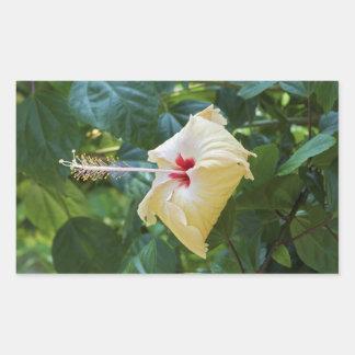 White Hibiscus Rosa Sinensis China Rose Mallow Rectangular Sticker