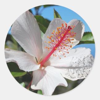 White Hibiscus Stickers