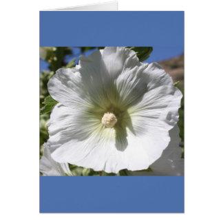 White Hollyhock Blossom Card