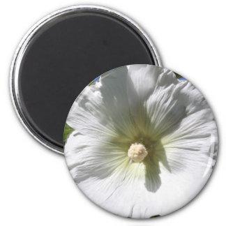 White Hollyhock Blossom Magnets