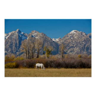 White Horse and Grand Tetons, Moose Head Ranch Poster