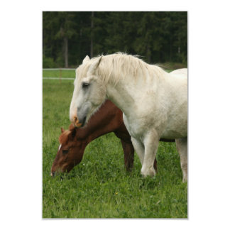 White Horse Animal Card