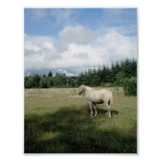White Horse at Pasture Poster