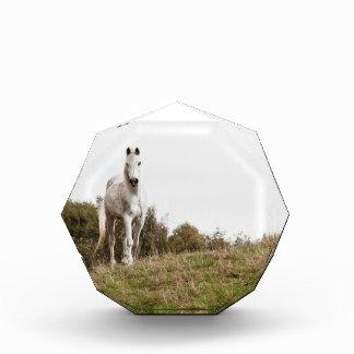 White horse acrylic award