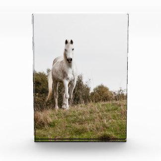 White horse awards