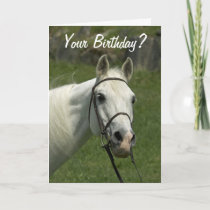 White Horse Birthday Card