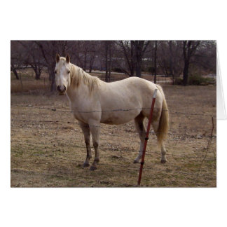 White Horse - Blank Greeting Card