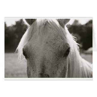 White Horse Blank Note Card