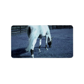 white horse blue grazing head down in grass address label