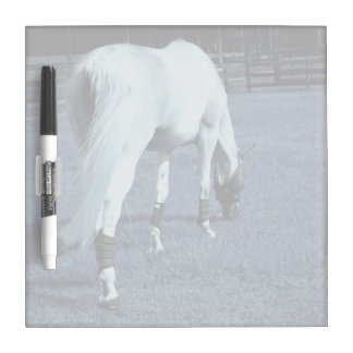 white horse blue grazing head down in grass dry erase board
