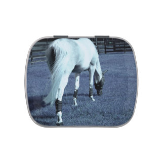 white horse blue grazing head down in grass jelly belly candy tins