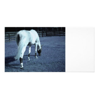 white horse blue grazing head down in grass picture card
