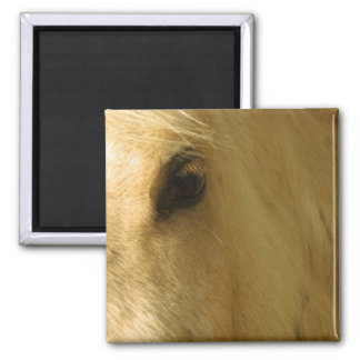 White Horse Closeup 2 Inch Square Magnet