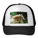 White Horse Closeup Mesh Hats