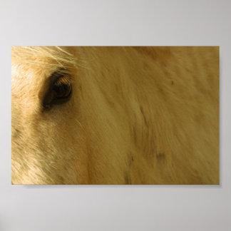White Horse Closeup Poster