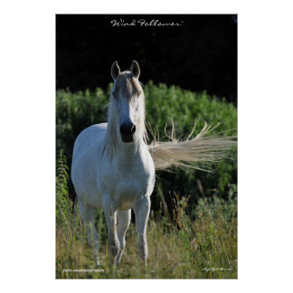 White Horse Equine Photo Poster