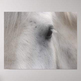 White Horse Eye Poster