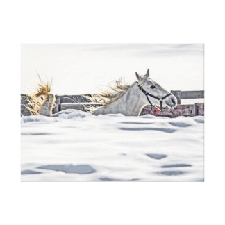 White Horse Galloping In Snow Canvas Print