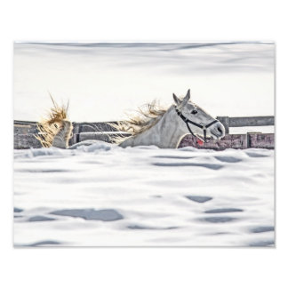 White Horse Galloping In Snow Photo Art